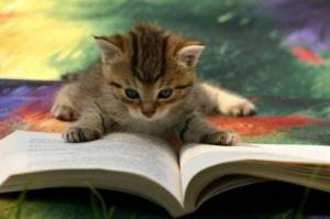 Cat reading book review